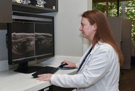 Neurosurgery at CARE Veterinarians