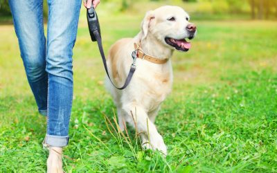 What Your Dog's Knees Might Be Trying To Tell You