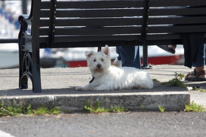 Summer Heat And How It Can Endanger Your Canine Family Member