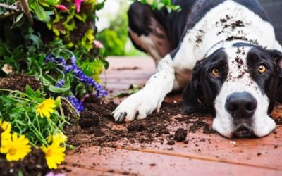 Around The House: Toxins That Endanger Pets