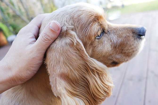 Seizures, Fits, Or Spells – What Is Happening And What Can I Do To Help My Pet