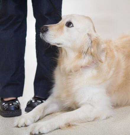 Veterinary Internal Medicine at CARE