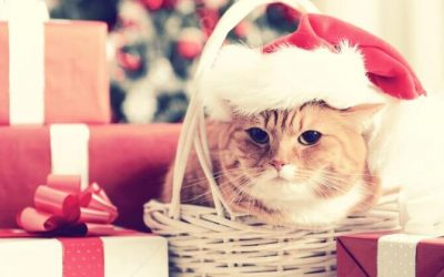 Pets as Holiday Gifts- A Good or Bad Idea?