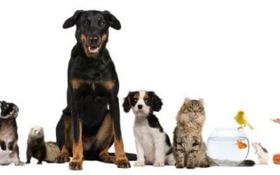 Celebrating World Veterinary Day