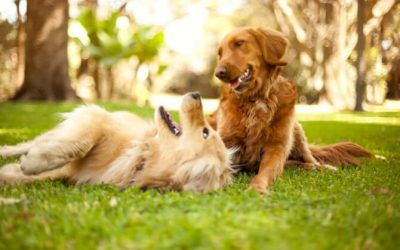 Life-Threatening Health Conditions Preventable By Spaying and Neutering