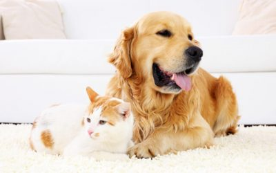Taking Care of Your Dog or Cat with Epilepsy